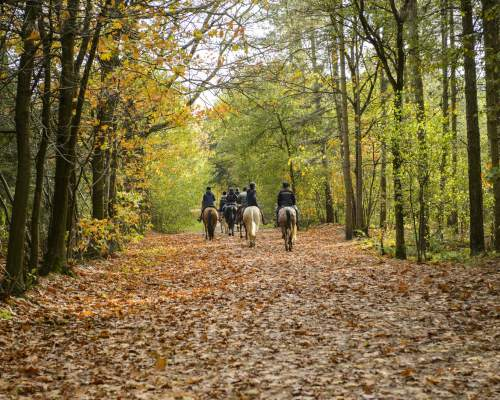Riding in the forest with the assistance of qualified teachers